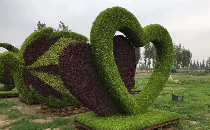 周口城市植物绿雕爱心造型现场实拍图