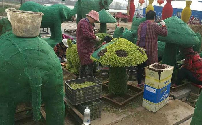 女工在对五色草造型进行插草作业