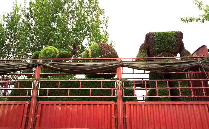 五色草立体花坛造型主体制作完成装车发往唐山