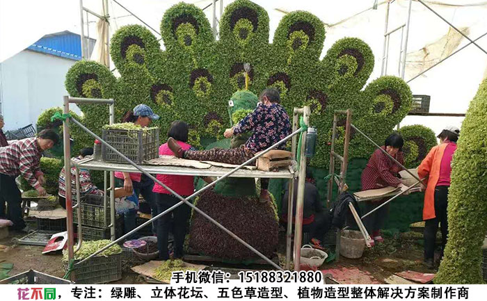插草工人在向五色草花坛造型插杆五色草
