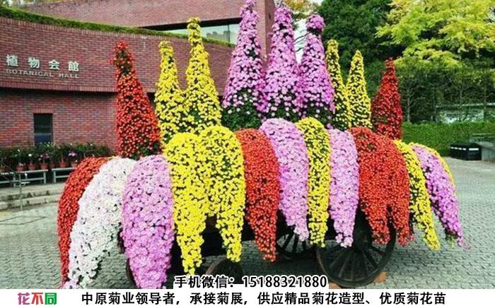 悬崖菊制作的花车